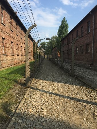 Is it best to book auschwitz tour in krakow