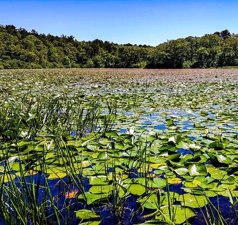 Nickerson State Park 이미지