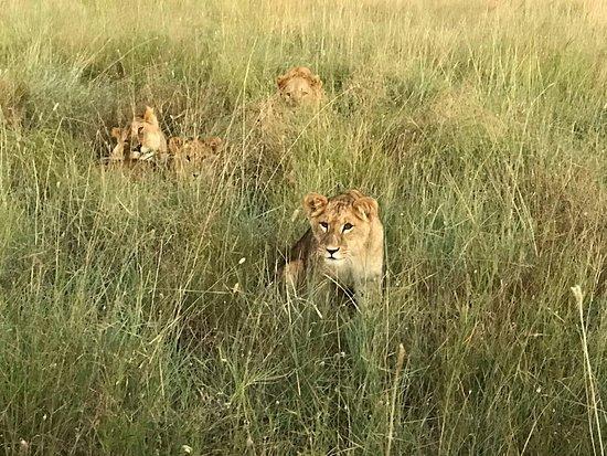 Laikipia County, Kenya: IMG-20180731-WA0000_large.jpg