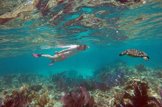 Key West Sailing, Snorkeling or...
