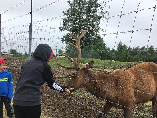 Saint-David-de-Falardeau, Kanada: Feeding the animals, so much fun