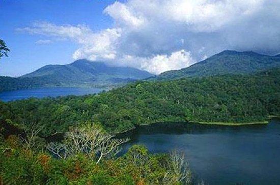Forfait Cosmo Bali: dauphin de...
