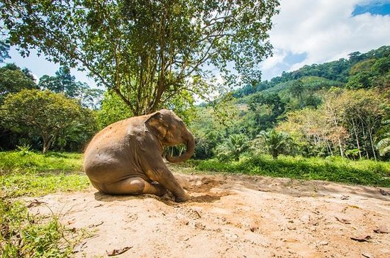 Elephant Care, Feeding, ATV Riding e