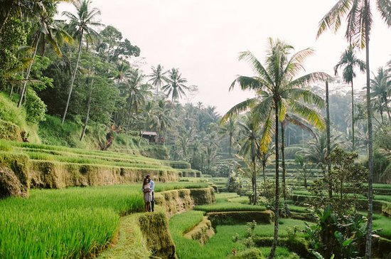 Ubud Green Village Bali Passeios
