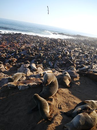 Erongo Region, Namibia: seals