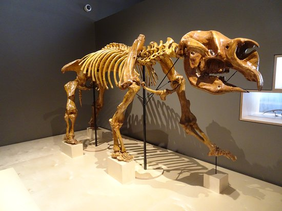 Megafauna Central - Museum and Art Gallery of NT