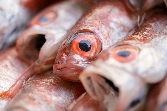 Okesho Fresh Fish Kaichuen: 津居山産のどぐろ