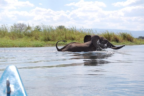 Elephants splashing