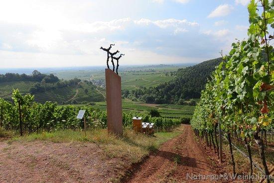Landau in der Pfalz, Tyskland: Blick über die Weinlage 'Kastanienbusch' und den Rheingraben bei Birkweiler