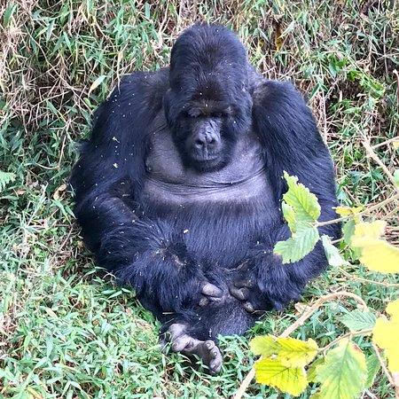 Mgahinga Gorilla National Park照片