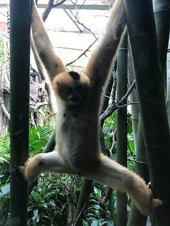 Bronx Zoo Photo