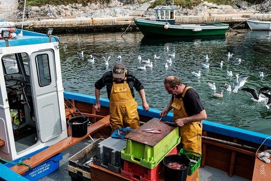 Ballintoy Harbour: fishermen at work