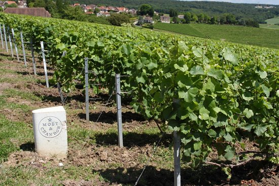 Marne, France: Champagne Route