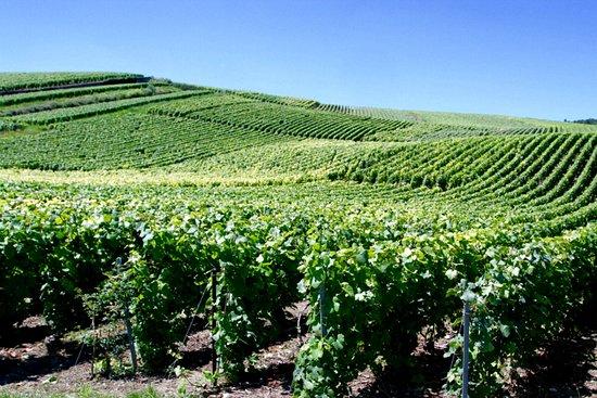 Marne, Francja: Champagne Route