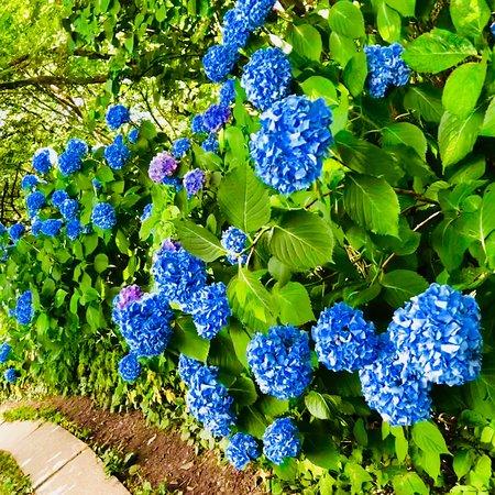 Niigata Prefecture, اليابان: photo3.jpg