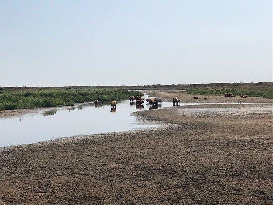 Nationaal Park Duinen van Texel: Pootje baden