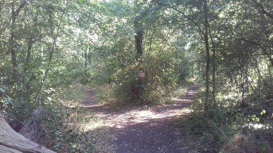 Bedfordshire, UK: Kings Wood walk