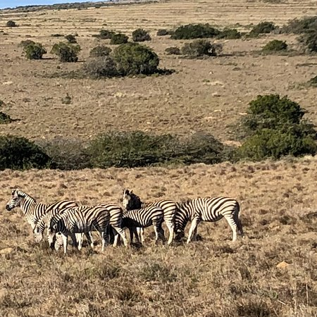 Amakhala Game Reserve, África do Sul: photo4.jpg