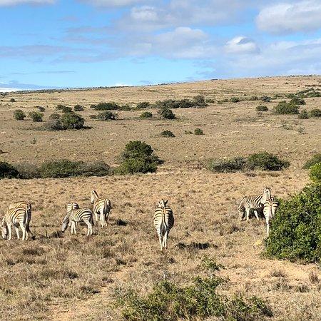 Amakhala Game Reserve, África do Sul: photo5.jpg