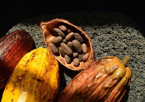 Botanica Chocolate