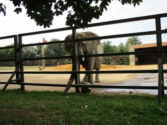 Howletts Wild Animal Park: Elephant.