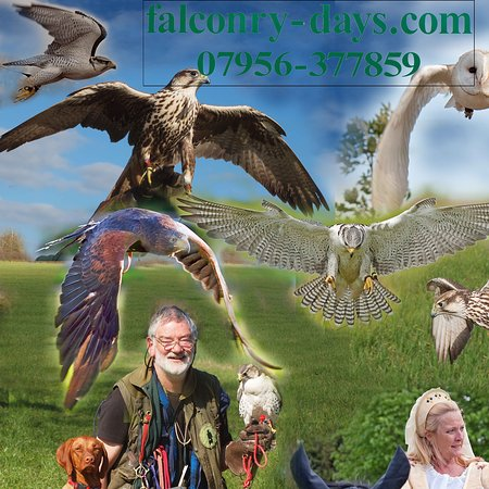 Falconry-Days