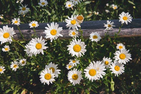 The John Denver Sanctuary: Flowers