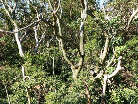 Lantau Trail: Immergrüne Wälder entlang des Weges