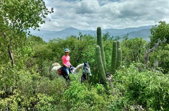 エキゾチックなフローラ半日ガイド乗馬ツアー
