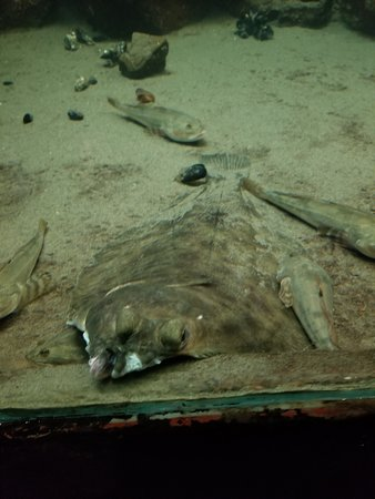Seaside Aquarium張圖片