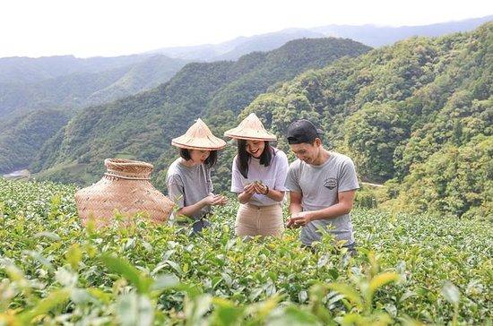 台北での1日限定プライベートティー体験