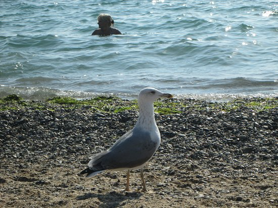 Krym, Russia: Пляжи Крыма не уступают Турецким Средиземноморским