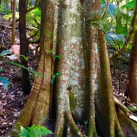 Katandra Reserve