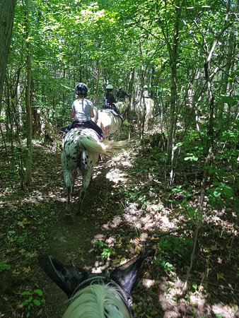 Grey County, Canadá: Some of the bush trail we ride through