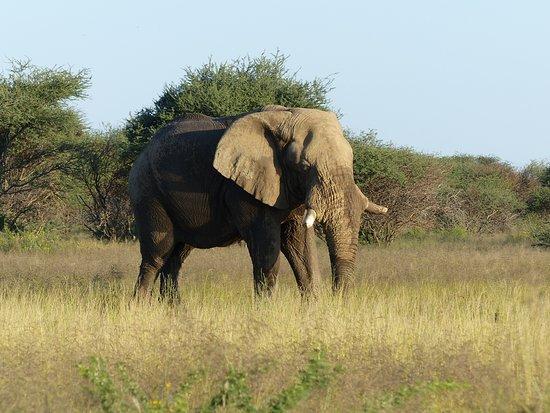 Erindi Game Reserve, Namibia: Im Park