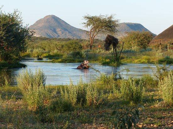 Erindi Game Reserve, Namibia: Am Hippo Pool
