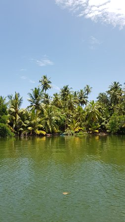 Dodanduwa, Sri Lanka: IMG-20180811-WA0031_large.jpg