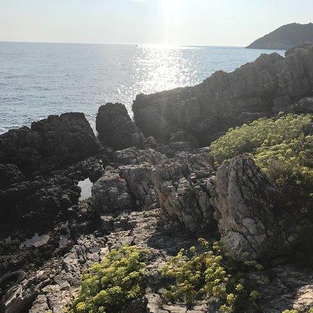 Nikos by the sea照片