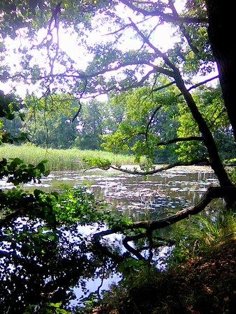 Racibórz, Polska: dzikość natury