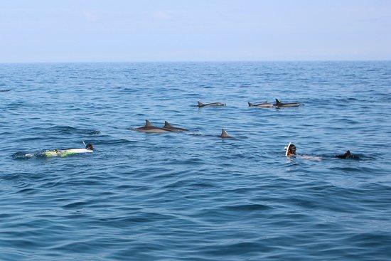 Lealao Ocean Adventures