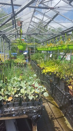 Merseyside, UK: Bromborough Pool Garden Centre