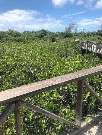 Gold Rock Beach: Mangroves Leading to Golden Rock Beach