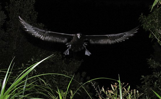 Petrel Colony Tours