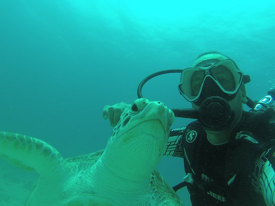 Blue Odyssey Diving: Tortue verte à Charly Shoal