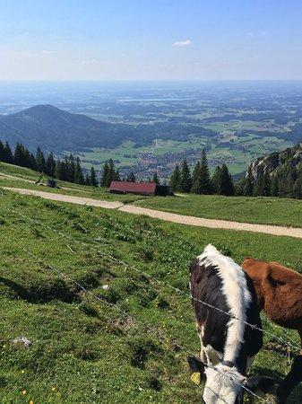 Aschau Im Chiemgau, Allemagne : Friendly cows on the mountain