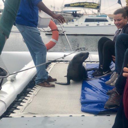 Foto de Catamaran Charters