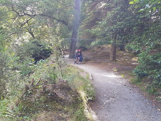 Tollymore Forest Park: 20180808_153513_large.jpg