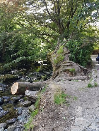 Tollymore Forest Park: 20180808_154156_large.jpg