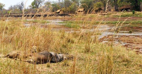 North Luangwa National Park, Zambia: Mwaleshi Camp