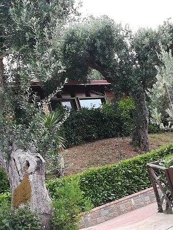 Stella Cilento, Italy: In foto parte della baita olivella bellissimo cottage